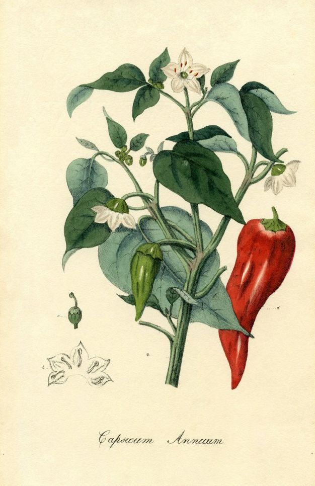 Chili contains capsaicin that has warming and irritation properties. http://www.darkchocolatecourse.com/knowledge/6-spices-for-chocolate/