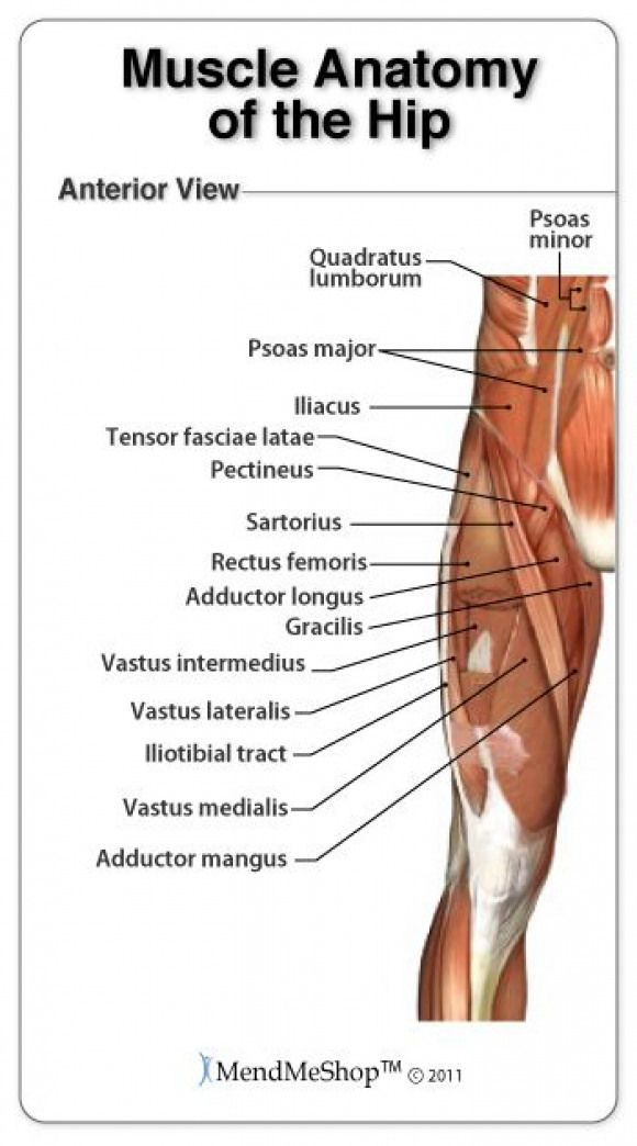 Groin Anatomy And The Hip Piriformis Muscles Tight Psoas