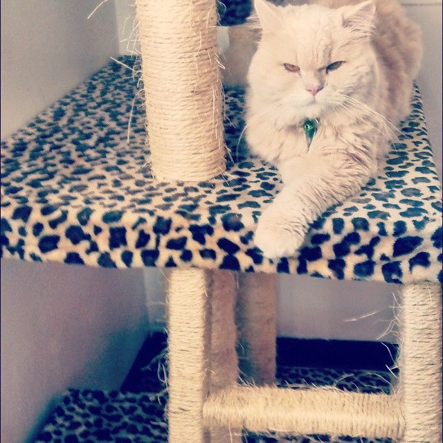 #cat #cats_of_instagram #nowergianforestcat