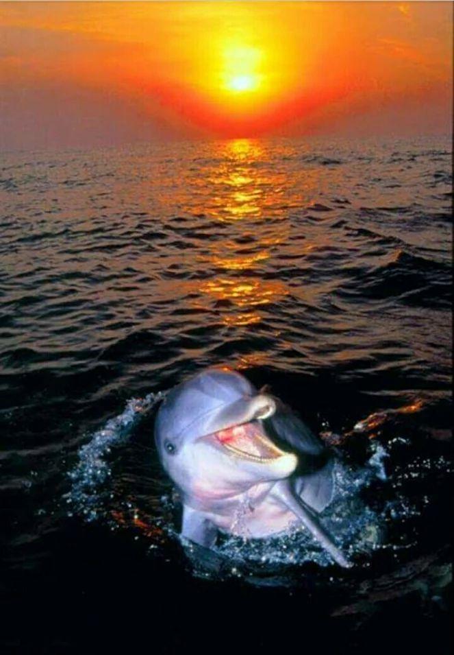 дельфин утро картинки границу