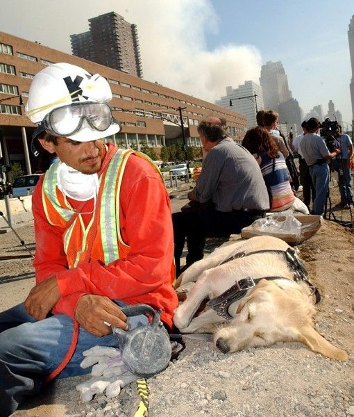Honoring the Heroic Hounds of 9/11 - PawNation.  SAUL AND SHANNON     Saul Apunte and his dog, Shannon, rest a bit after a day of searching for survivors.