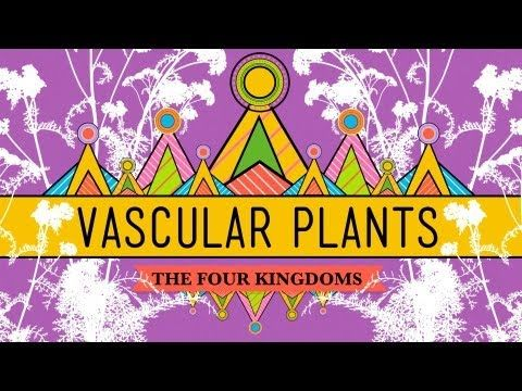 VASCULAR PLANTS - Hank introduces us to one of the most diverse and important families in the tree of life - the vascular plants. These plants have found tremendous success and the their secret is also their defining trait: conductive tissues that can take food and water from one part of a plant to another part.  11:54 minutes.