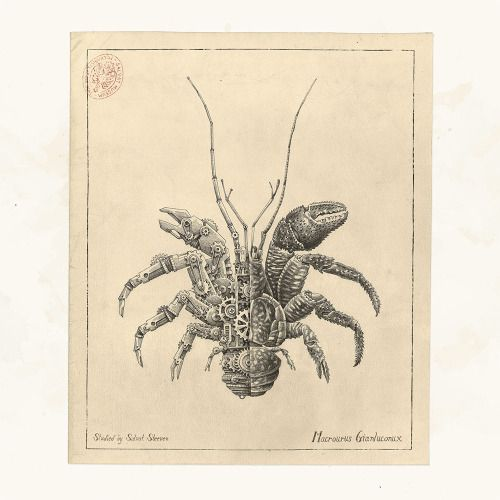 nevver:  Clockwork Crustacea Steeven Salvatby