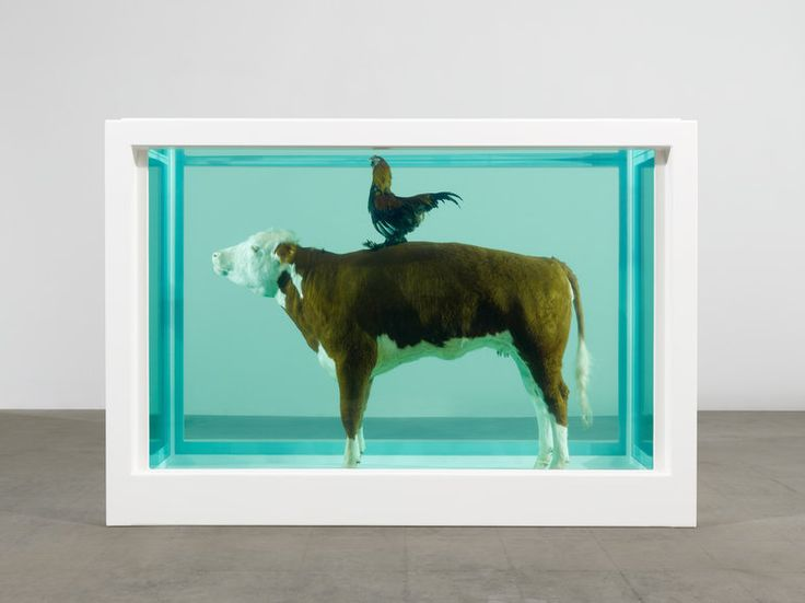 To celebrate the opening of Mark Hix's new restaurant venture in the Tramshed, East London, Damien Hirst specifically created this monumental formaldehyde work. 'Cock and Bull' – a Hereford cow and cockerel preserved in a steel and glass tank of formaldehyde – makes reference to Tramshed's menu which is centred around chicken and beef dishes. The sculpture is elevated above diners in the centre of the 1000 square foot old electricity generating station.