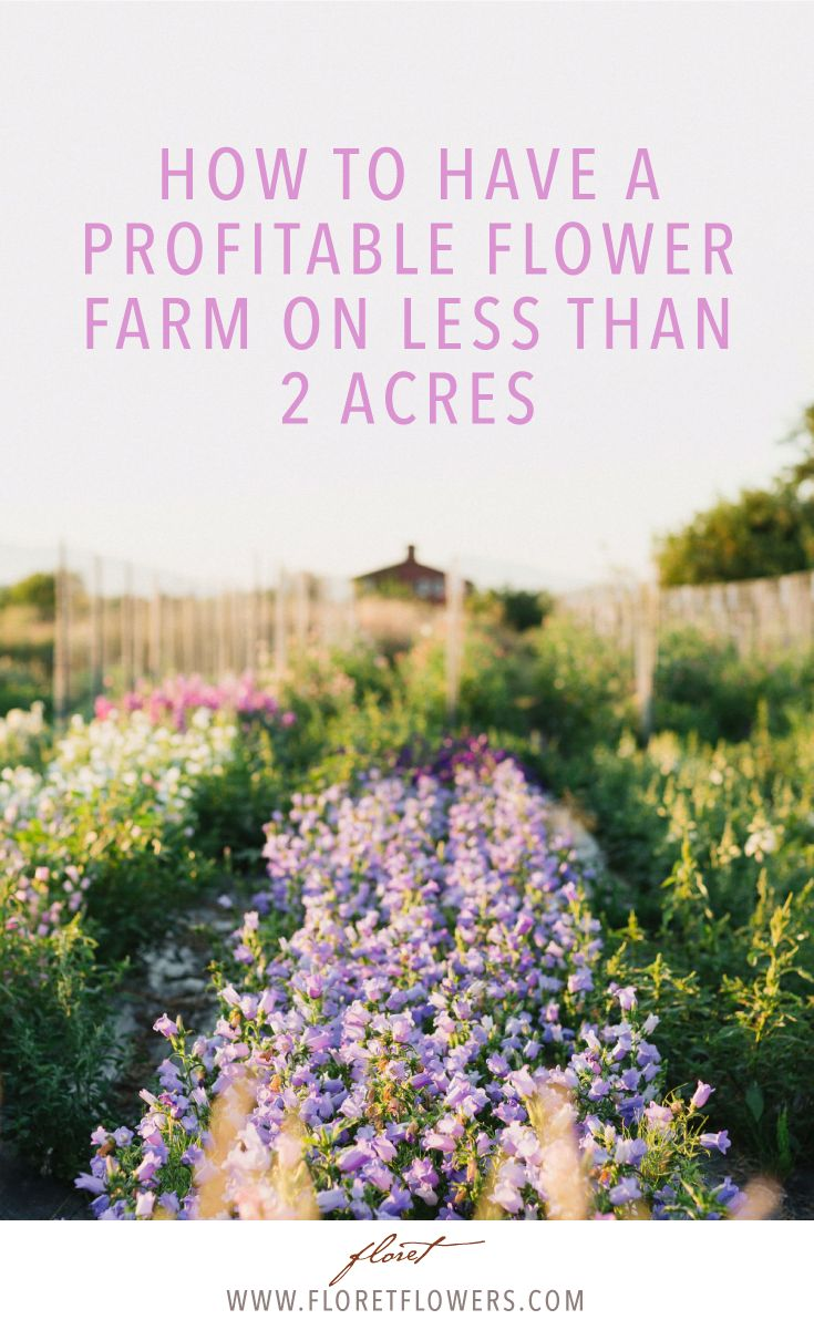 Build a thriving flower farm business on two acres or less.