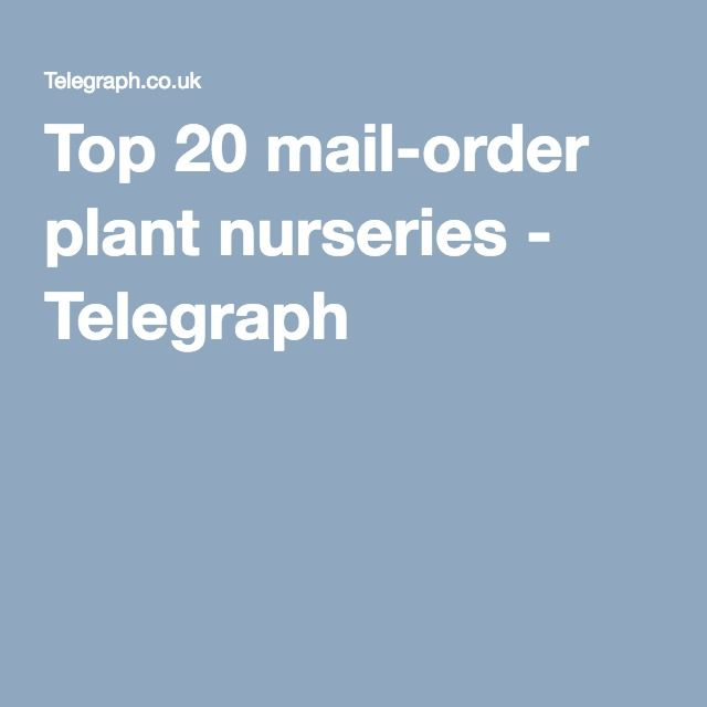 Best 25 mail order plants ideas on pinterest mail order for Best mail order food