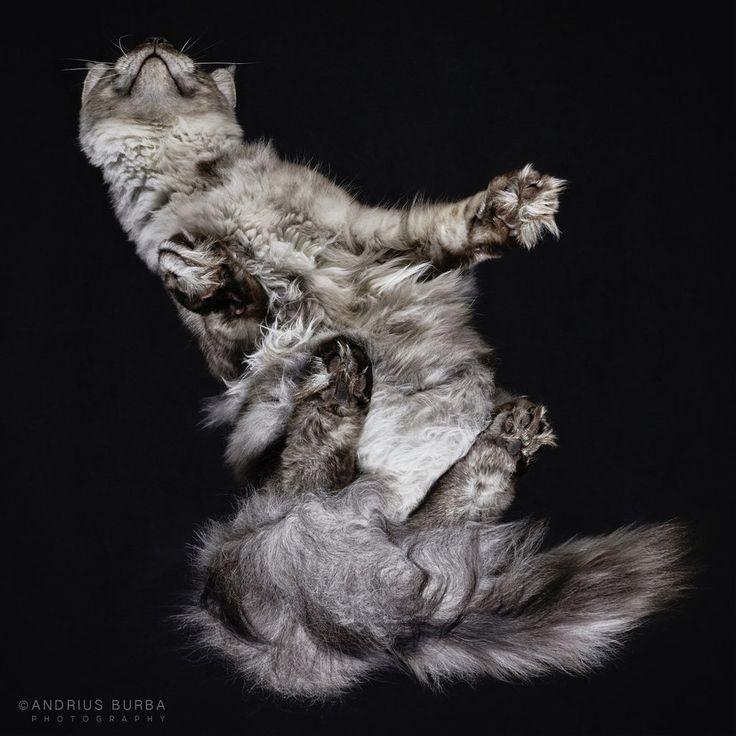 La impresionante sesión de fotos de gatos desde abajo (FOTOS)