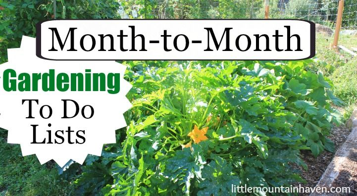 Month-to-Month Gardening To Do Lists
