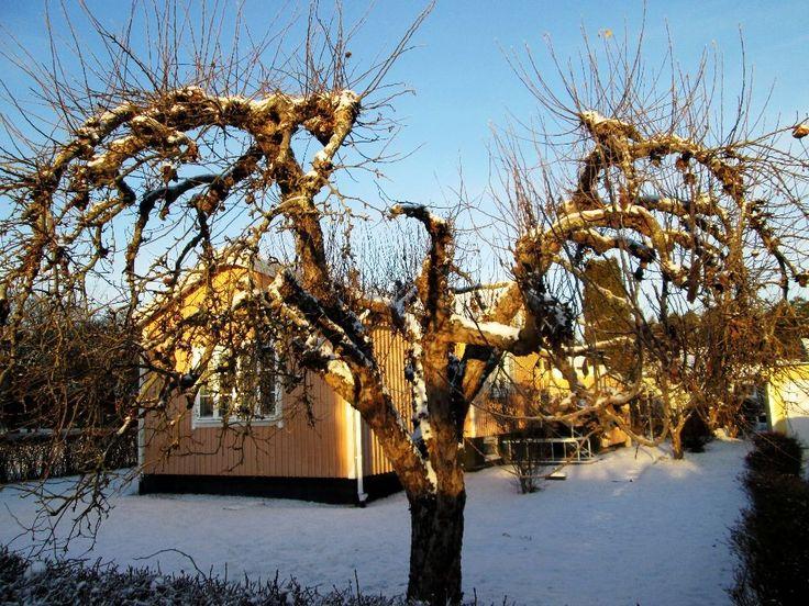 Nature in Uppsala, Sweden