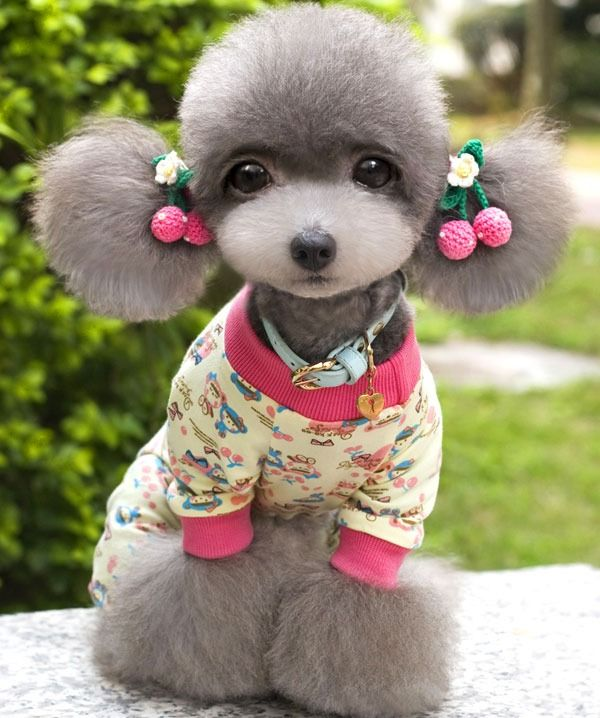 The dog may not be real but the haircut sure is cute!