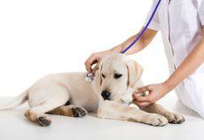 Pets - Raising a Healthy Pet - Dr.Weil