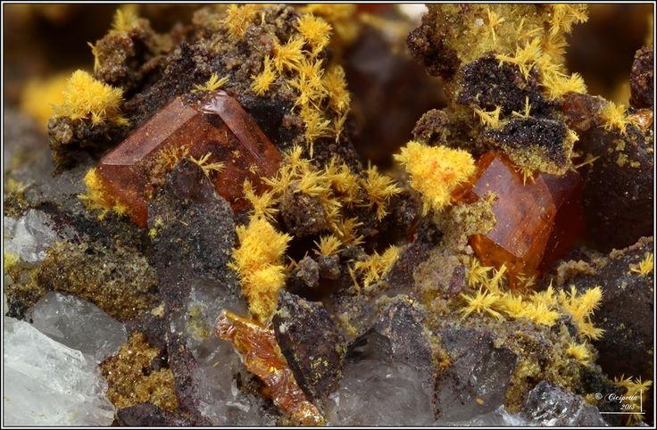 Mimetite and Wulfenite, Santa Ana Mine (Chapacase Mine), Tocopilla District, Tocopilla Province, Antofagasta Region, Chile. Fov 3.56 mm