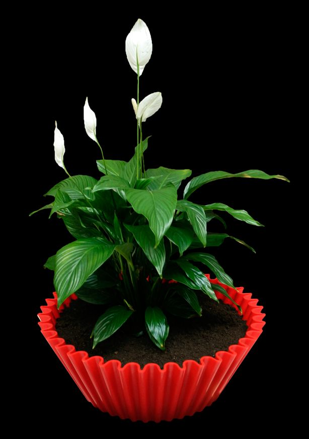 Love this red container from Sweet Cake!: Container Garden, Cupcakes Plants, Cupcakes Planters, Cupcakes War, Sweet Cakes, Grote Cupcakes