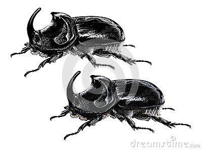 Escarabajo de rinoceronte