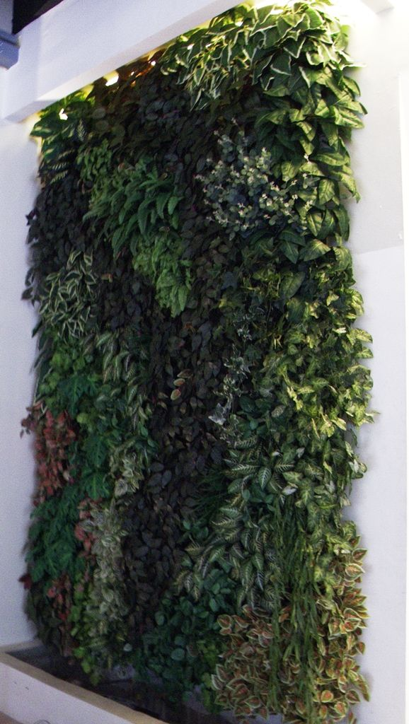 Artificial Plant Greenwall @ CDC Millennium Showroon in Ortigas Center Philippines