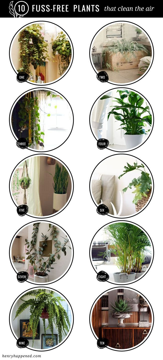 10 BEST : Fuss Free House Plants That Clean the Air - Henry Happened