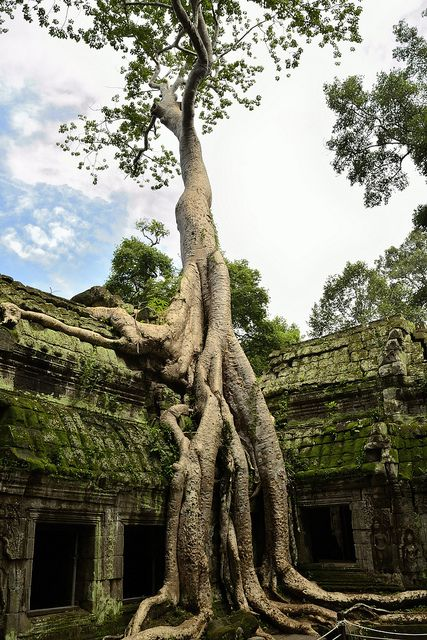 Ta Prohm, Cambodia Saw someone's pic who went here when I was in N. Thailand... Been on my bucket list ever since.