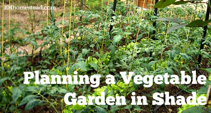 1000 Images About Growing Veggies In The Shade On