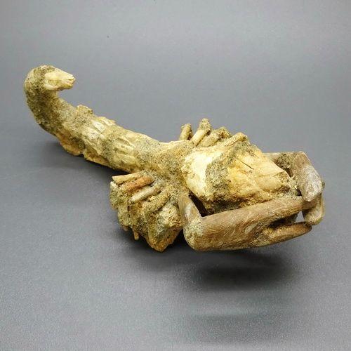 Fosil Scorpion Langka