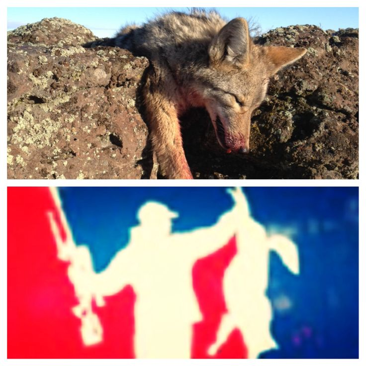 Coyote hunting essay | Term paper Academic Writing Service