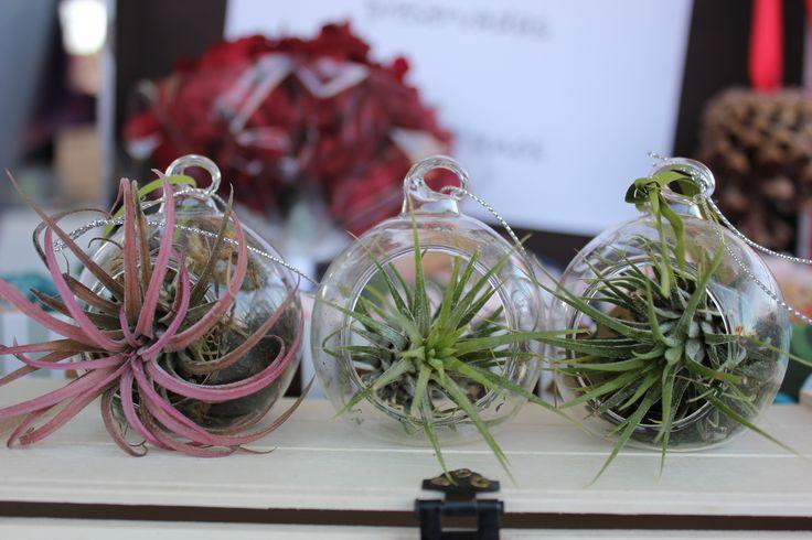 Bolitas de cristal con claveles del aire naturales #regalooriginal #clavelesdelaire #tilladsia #navidad #decoracion #cristal #diseño #regalo #pocomantenimiento #unico