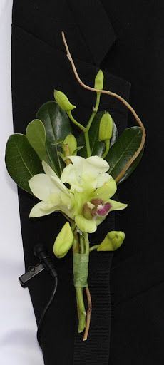 Orchid Bout