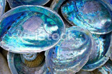 Paua Shell (New Zealand Abalone) Royalty Free Stock Photo