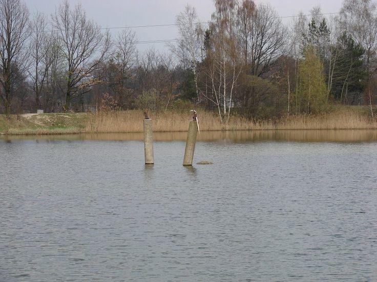 STAWY W  ZGIERZU- KRZYWIE http://www.garnek.pl/bog1dan/9357263/stawy-w-zgierzu-krzywie