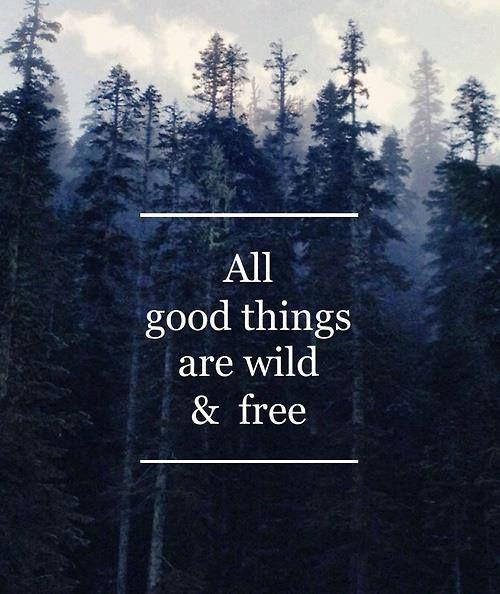 Uploaded to PinterestFree Spirit Quotes Tumblr
