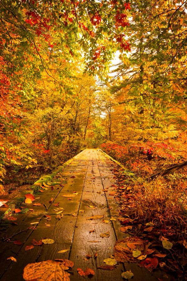 Warm autumn path way on Brook by Jason Arney on Getty Images