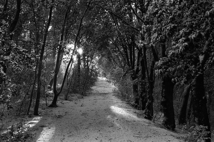 #Snow in #Tuscany: love #Ilford #film + #Leica combo, love analog photography.