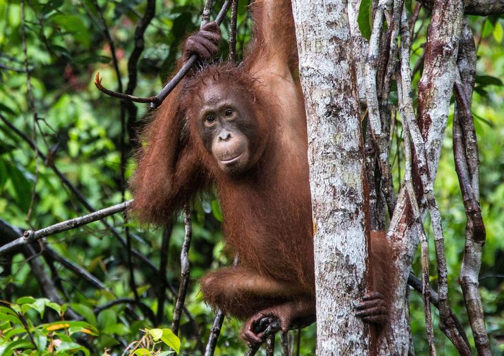 30+ Amazing Rainforest Animals; Most of Them is Endangered