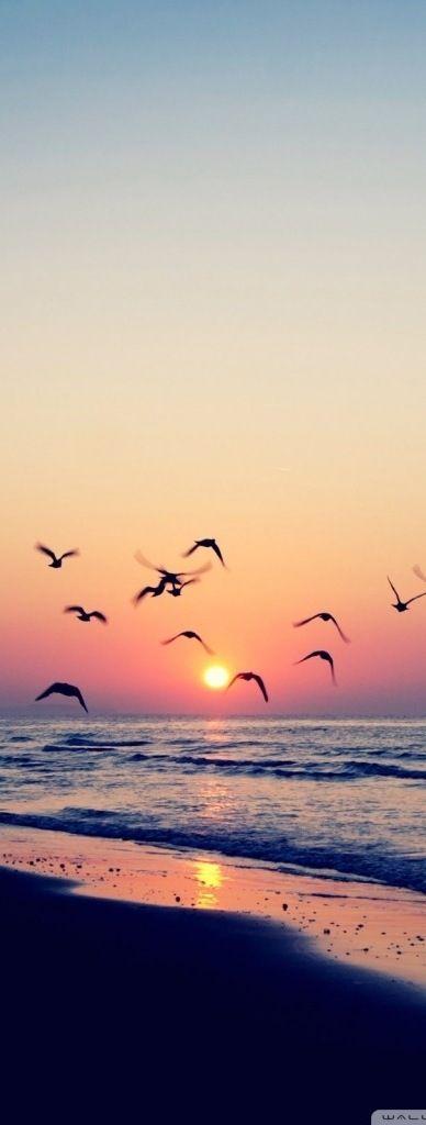 Widok ptaków w locie przywodzi na myśli pojęcie wolności..
