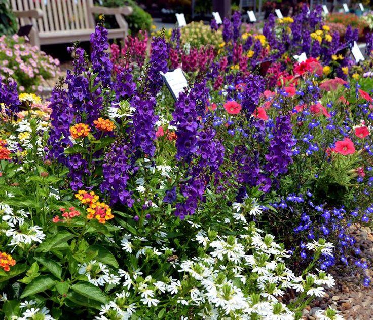 These Smashing Backyard Ideas Are Hot And Happening: Más De 25 Ideas Increíbles Sobre Purple Lantana En