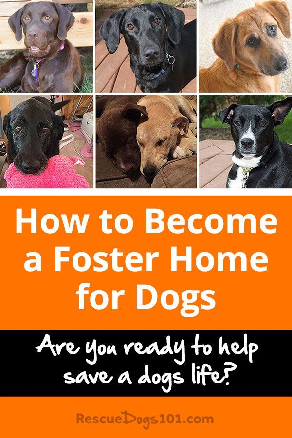 How To Foster A Dog Dogs And Kids Foster Dog Save A Dog