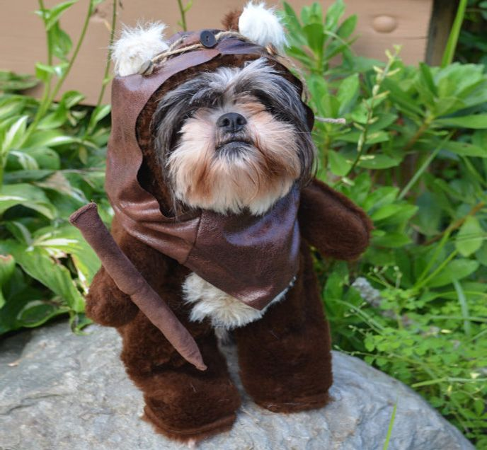 'Tis the season for dressing your dog up and making them look like an idiot, and when not dressing them up to look like Indiana Jones, a football…