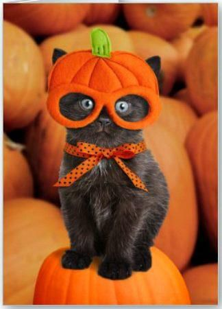 Cat be ready for Halloween! lol
