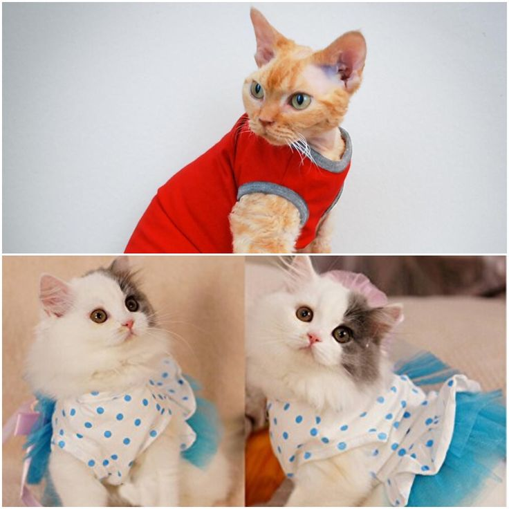 Get best clothes for your kitty colorful hoodies cat