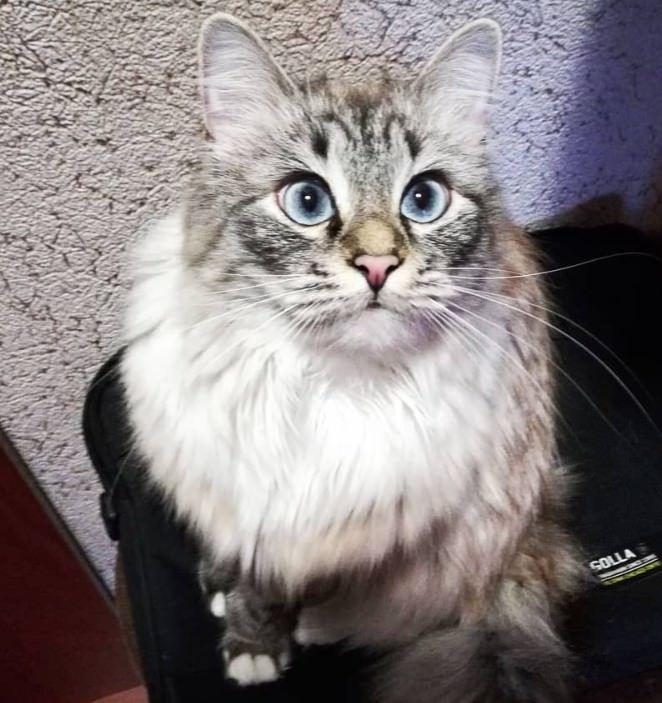 120 Funny Girl Cat Names   Best Cat Names   Girl cat names