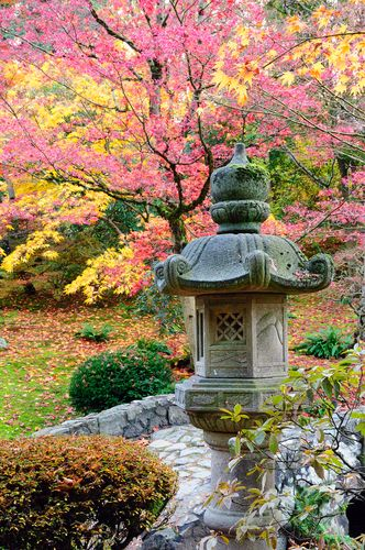 Beautiful colors at the Japanese Garden of Seattle