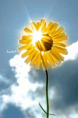sun animated