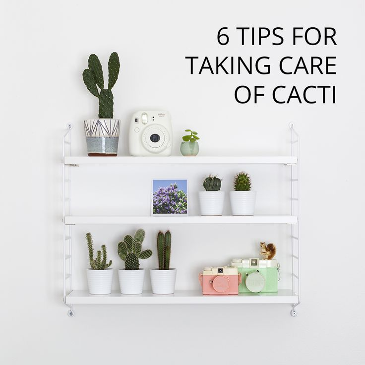 6 TIPS FOR TAKING CARE OF CACTI: http://www.candypop.uk.com/2015/11/27/6-tips-for-taking-care-of-cacti-urban-jungle-bloggers/