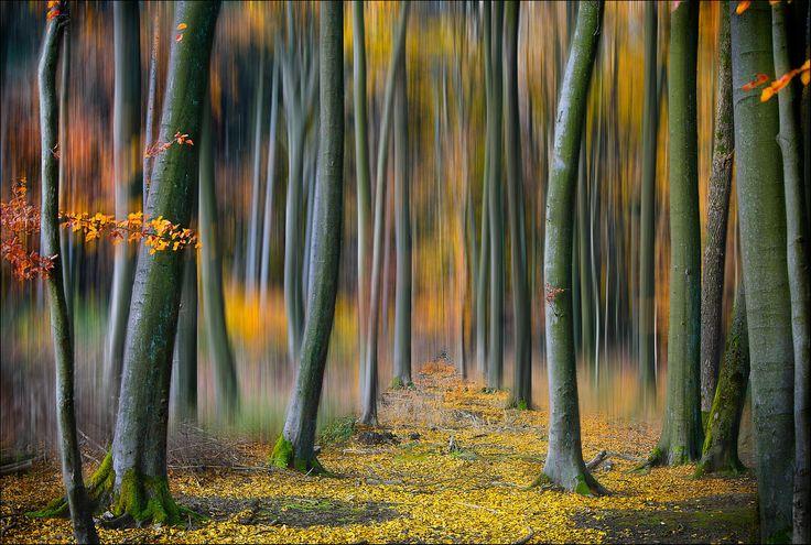 Autumn Path by EM-Photographies .  / 500px