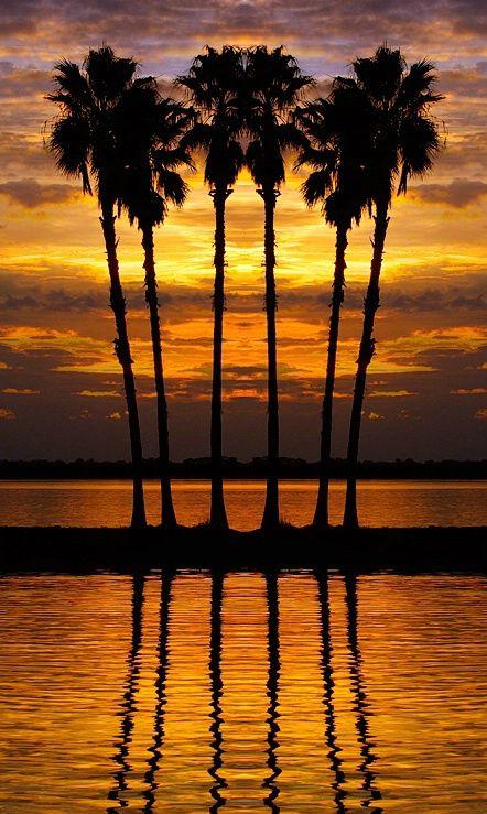 ✯ Sunset Six