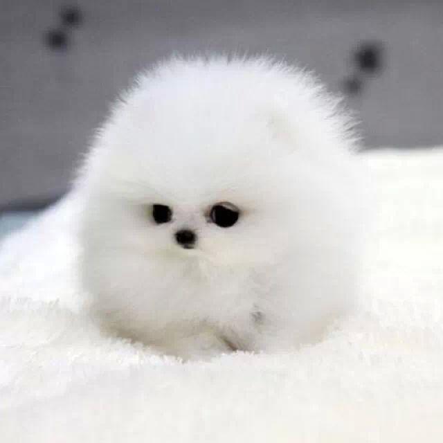 O god may i adopt him! Cutee
