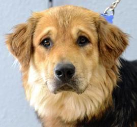 Oregon Dog Rescue Tualatin Or