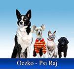 HOTEL DLA PSÓW, KOTÓW I INNYCH ZWIERZĄT SALON STRZYŻENIA DUŻYCH I MAŁYCH PSÓW ORAZ KOTÓW TOR AGILITY SEMINARIA NOCLEGI Salon strzyżenia dużych i małych psów oraz kotów