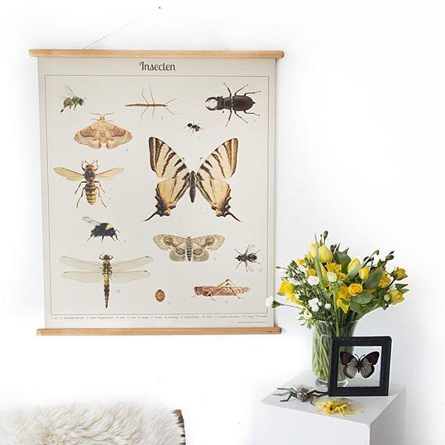 SOLD Schoolplaat Insecten New { €25 }