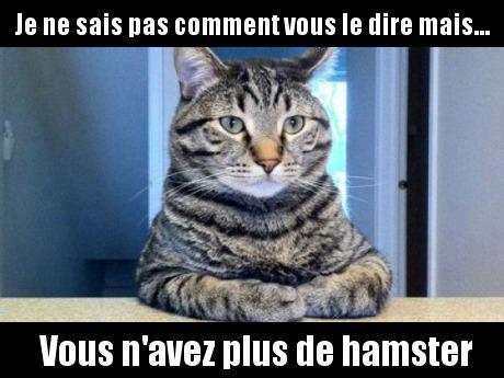 Confession de chat                                                       …
