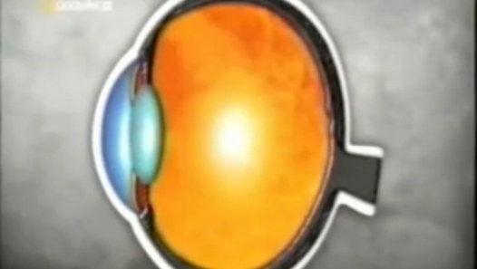 Cerebro: Percepcion del movimiento (Vision y audicion)